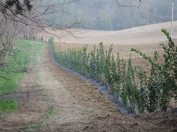 Costi-impianti-per-agricoltura-traversetolo