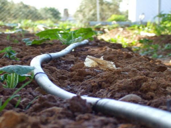 Irrigazione piante da frutto quattro castella traversetolo for Irrigazione a goccia per pomodori