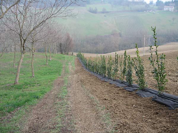 Installazione-impianti-per-agricoltura-quattro-castella