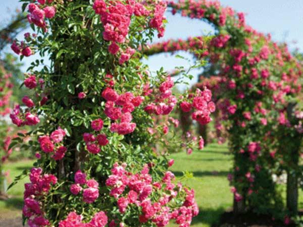 Giardiniere-parma-Reggio-Emilia