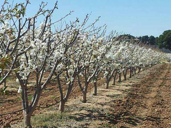 Irrigazione-a-goccia-alberi-da-frutto-traversetolo