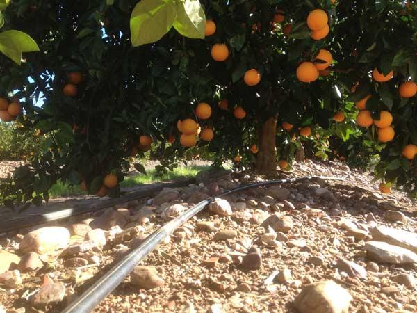Irrigazione-piante-da-frutto-quattro-castella-traversetolo